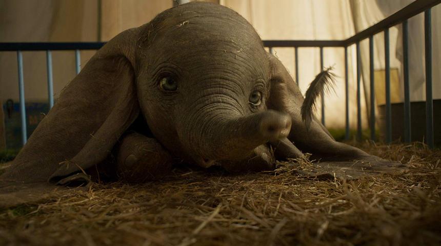 Nouveautés : Dumbo et Sauver ou périr