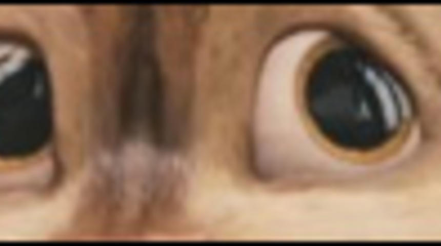 20th Century Fox devance la sortie d'Alvin and the Chipmunks: The Squeakquel