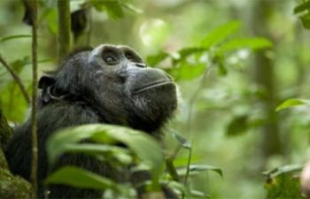 L'Hebdo : Le Jour de la Terre sur écran géant